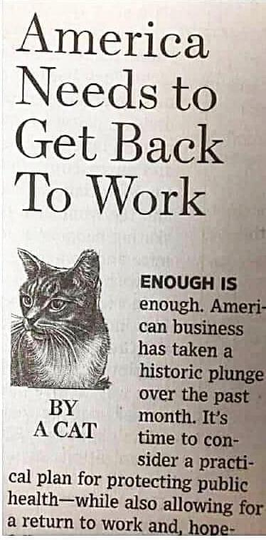 Cats: Peoples needs to get back to work!
